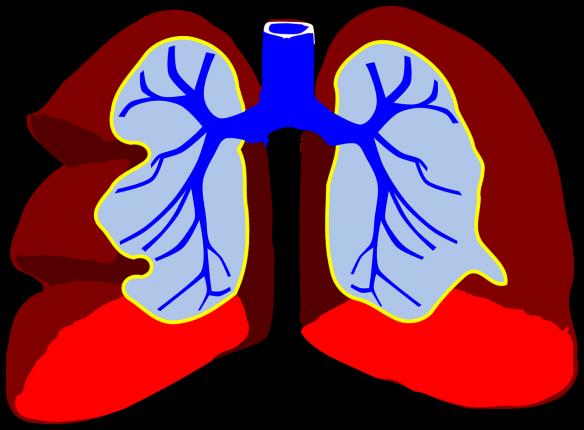 Décrasser ses poumons de la fumée de la cigarette, comment faire ?